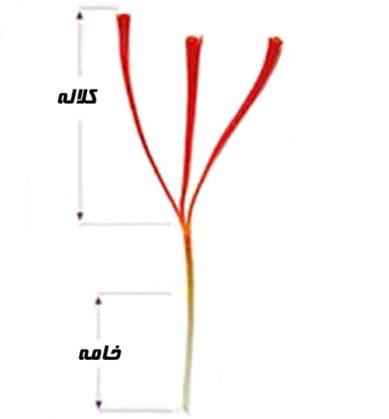 ساختار رشتهی زعفران